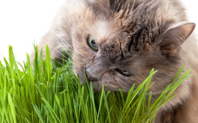 Phytotherapy for pets